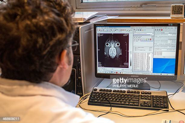 A laboratory assistant looks at a computer screen as he works with a magnetic resonance imaging device dedicated to the mouse and rat to study...