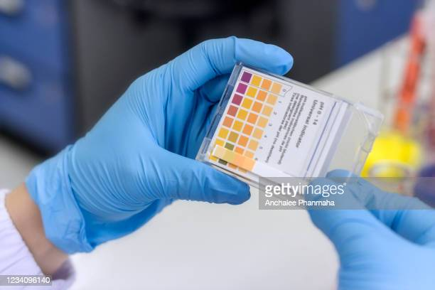 laboratory concept; the scientist is checking acid-base by litmus paper. - alkaline stock pictures, royalty-free photos & images