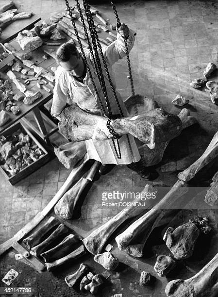 Laboratory of paleontology at the Natural History Museum 1943 in Paris France