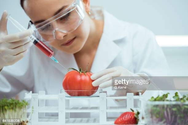 laboratory - genetic modification stock pictures, royalty-free photos & images