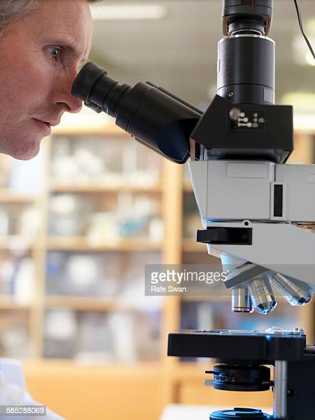 Laboratory scientist viewing slide with upright compound microscope
