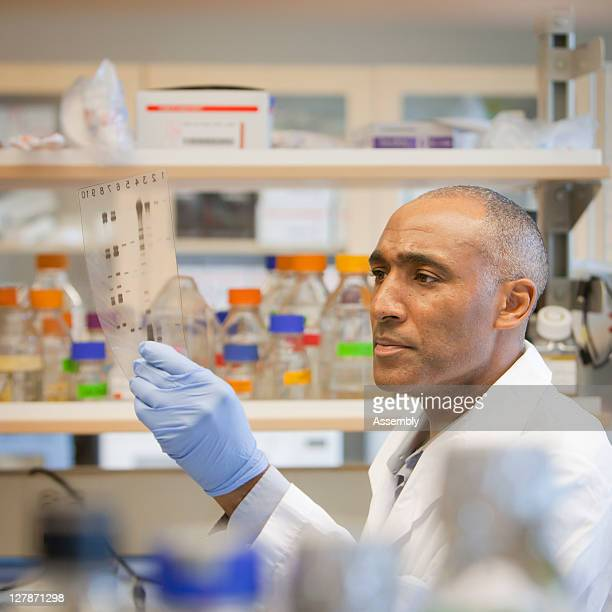 Laboratory technician examines DNA gel