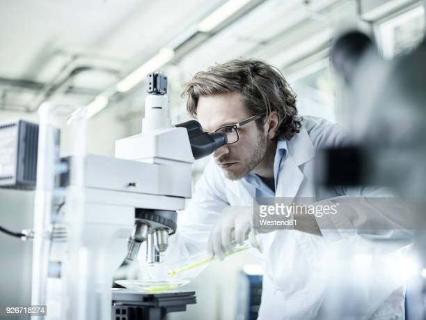 laboratory technician looking through microscope in lab - microscope stock pictures, royalty-free photos & images