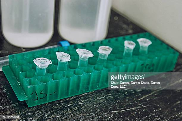 laboratory test tubes - damlo does stock pictures, royalty-free photos & images