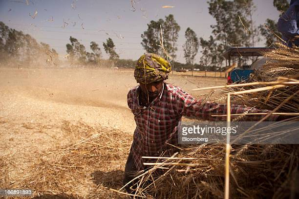 A laborer harvests wheat in the district of Jalandhar in Punjab India on Tuesday April 16 2013 Wheat harvest in India the secondbiggest grower may...