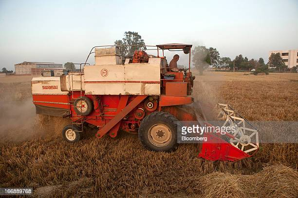A Laborer Harvests Wheat With Punjab Tractors Ltd Swaraj 8100 Combine Harvester In The District