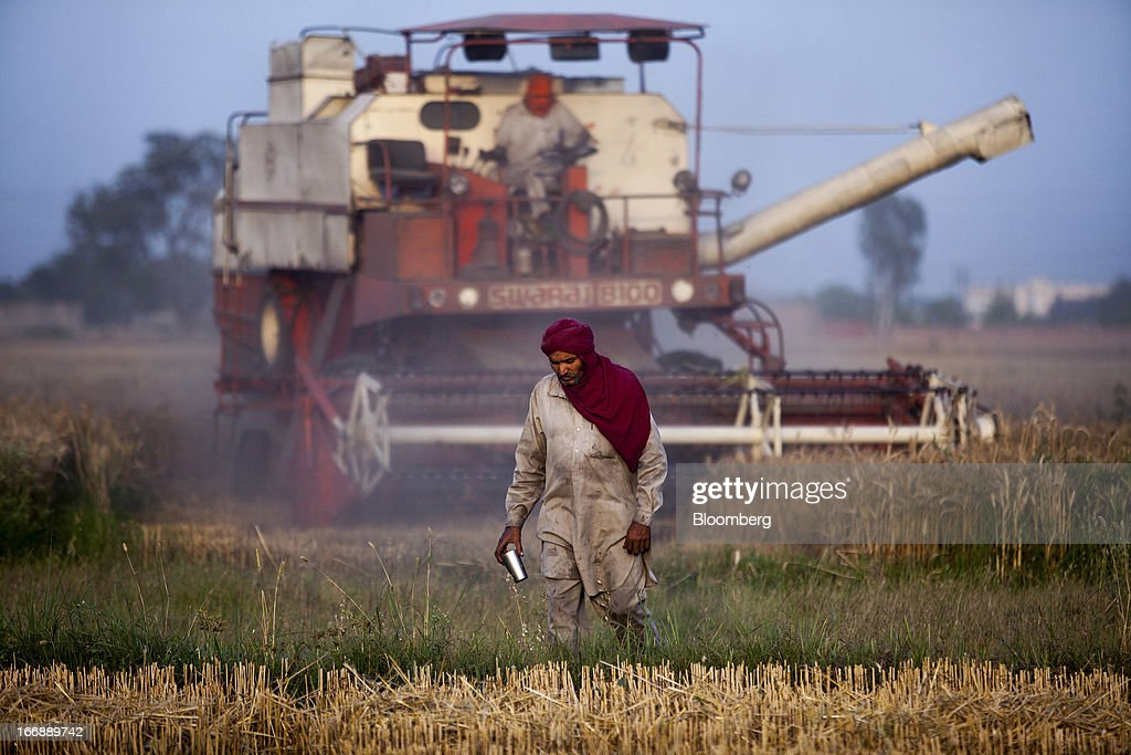 A laborer walks in front of a Punjab Tractors Ltd Swaraj 8100 combine harvester as it harvests wheat in the district of Jalandhar in Punjab India on..
