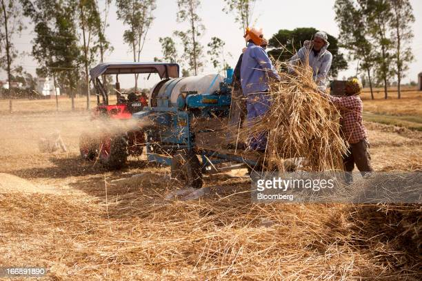 Laborers harvest wheat in the district of Jalandhar in Punjab India on Tuesday April 16 2013 Wheat harvest in India the secondbiggest grower may...