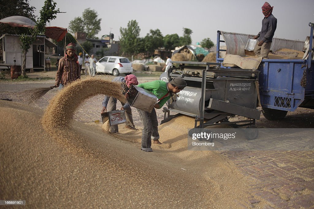 Laborers shovel harvested wheat at a grain market in the district of Jalandhar in Punjab, India, on Tuesday, April 16, 2013. Wheat harvest in India, the second-biggest grower, may reach a record for a sixth straight year after farmers increased use of high-yielding seeds and winter rains boosted crop prospects, a state-run researcher said. Photographer: Prashanth Vishwanathan/Bloomberg via Getty Images