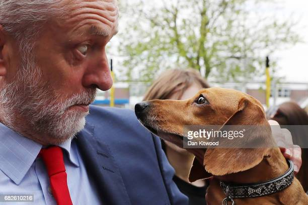 Labour Leader Jeremy Corbyn is startled by Cody the Dachshund during a campaign event outside the James Paget Hospital on May 2017 in Great Yarmouth...