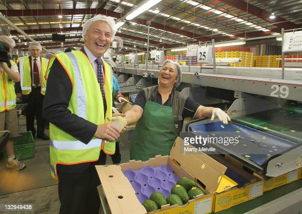 Labour Party leader Phil Goff meets workers on the Avocado packing line at the Trevelyan Kiwi Fruit Orchard on November 16, 2011 in Te Puke, New...