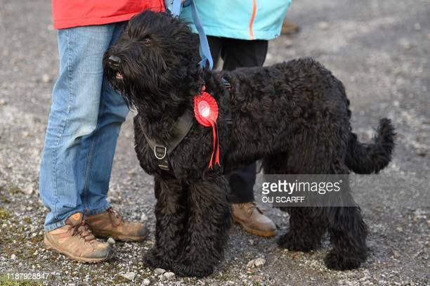 A Labour party supporter's dog wears a red rosette as they await the arrival of Britain's Labour Party leader Jeremy Corbyn during a general election...