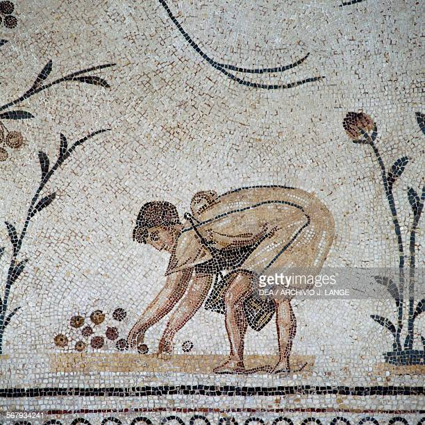 Labourer gathering olives in a basket from the Triumph of Neptune with the seasons mosaic from Caput Vada La Chebba Tunisia Roman civilisation 2nd...
