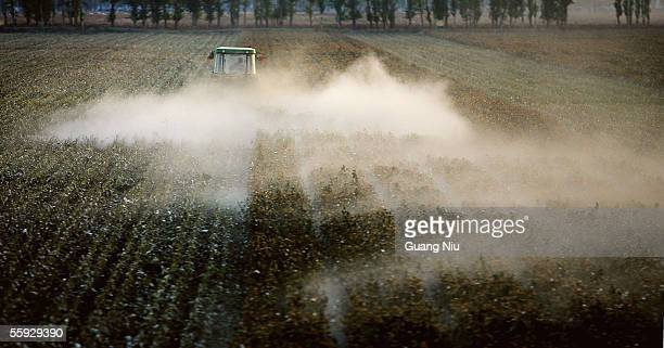 A labourer works in a cotton field on October 15 2005 in Shihezi city of Xinjiang province China Every year thousands of farmers from inland...