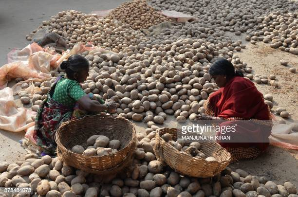 Labourers select potatoes from a wholesale shop at the Agriculture Produce Market Committee Yard in Bangalore on November 24 2017 / AFP PHOTO /...