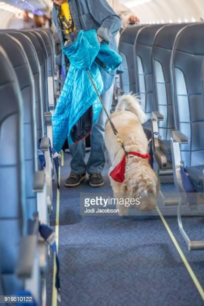 """labradoodle besitz seiner """"besitzer mit einer leine wie sie ausstiegsstelle - servicehund stock-fotos und bilder"""