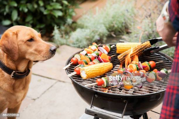 labrador dog looks interested at food on barbecue. - barbecue grill stock pictures, royalty-free photos & images