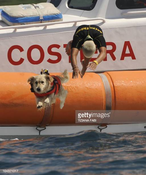 A labrador dog plunges into the sea with its instructor during a patrol at Riva dei Tarquini in the Tyrrhenian Sea about 100kms north of Rome on...