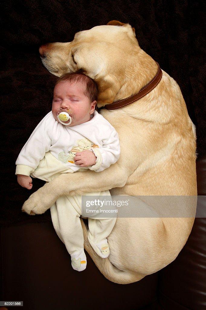 Labrador hugging New Born Bab : Stock Photo