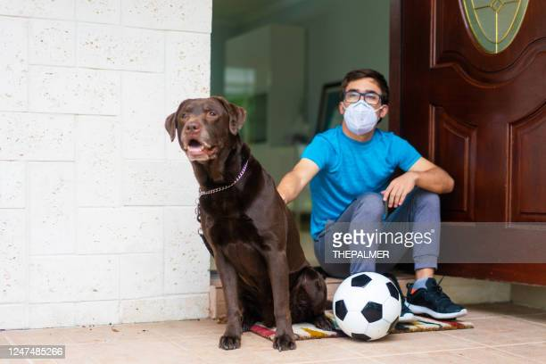 labrador retriever with owner checking in front of him - football face mask stock pictures, royalty-free photos & images
