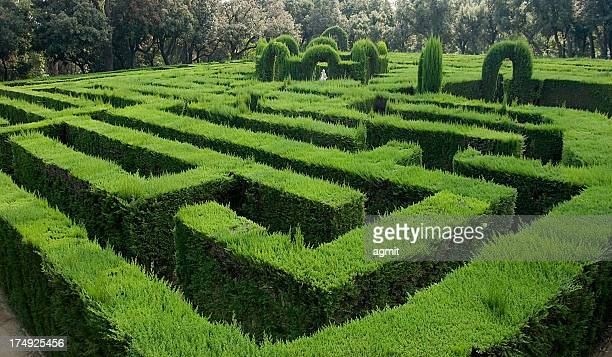 labyrinth - hedge stock pictures, royalty-free photos & images