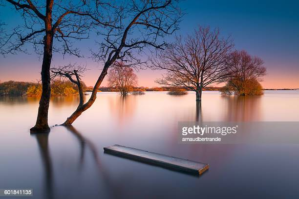 lac de grand-lieu, nantes, loire-atlantique, france - loire atlantique stock pictures, royalty-free photos & images