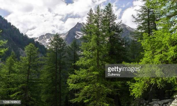 lac de trécolpas, mercantour - alpes maritimes stock pictures, royalty-free photos & images