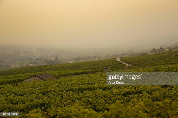lac leman region with vineyards and rural towns - ヴォー州 ストックフォトと画像