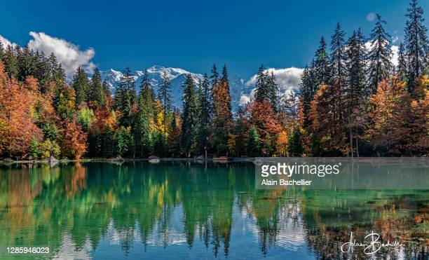 lac vert - alain bachellier photos et images de collection
