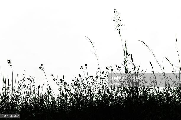Encaje de hierba