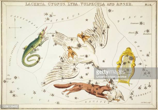 Lacerta, Cygnus, Lyra, Vulpecula and Anser. Card Number 14 from Urania's Mirror, or A View of the Heavens, one of a set of 32 astronomical star chart...