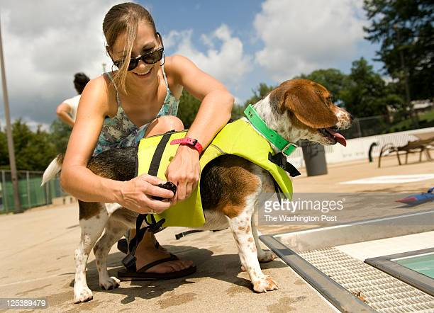 Lacey Maddrey puts a life vest on her beagle 'Hank' before he goes into the DC's Upshur pool in Washington DC on September 10 2011 About 75 dogs and...