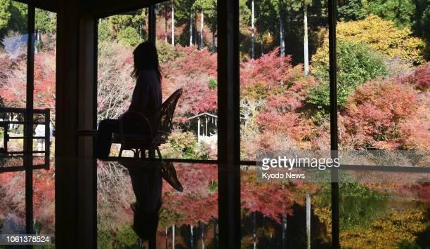 Lacquer-coated desk reflects colorful autumn foliage at Kankyo Geijutsu no Mori park in Karatsu in Saga Prefecture, southwestern Japan, on Nov. 10,...