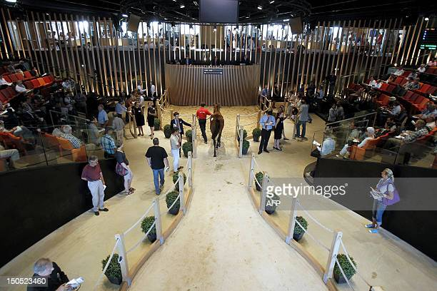 A lad walks a yearling horse into the auction room on August 20 at the Elie de Brignac's house in Deauville western France on the third day of the...
