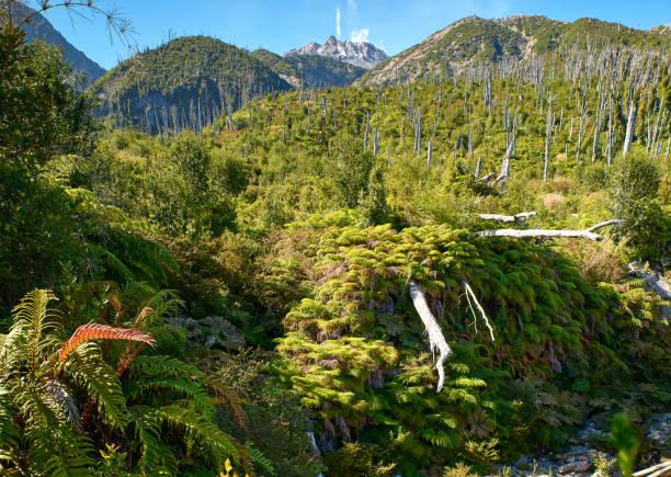 Laderas de las montañas cubiertas de helechos y Volcán Chaitén  - Parque Nacional Pumalín