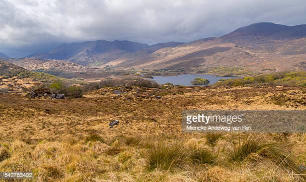 -Ladies View, a scenic point on Upper Lake on the N71 portion of the Ring of Kerry, Killarney National Park, Co. Kerry, Ireland.