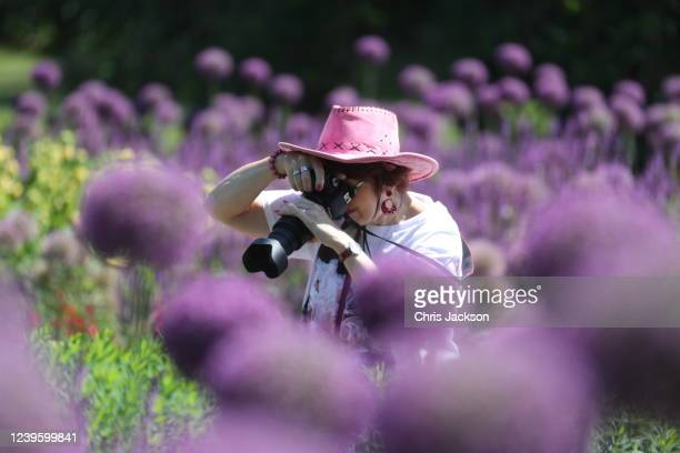 Lady admires the alliums in Royal Botanic Gardens, Kew on the day it re-opened to the public after lockdown on June 01, 2020 in London, England . The...