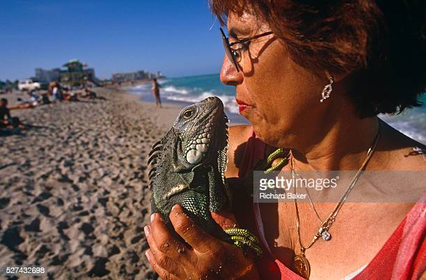 A lady and her pet green iguana Iguanas stop walking along the surf in Miami Beach's coast for a moment to stand on the sand and kiss on the lips...