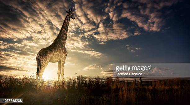 lady at sunset - south africa stock pictures, royalty-free photos & images