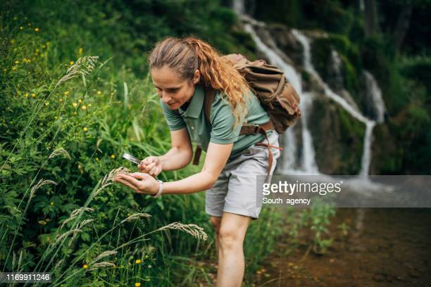 lady biologist exploring plants by the waterfall - environmentalist stock pictures, royalty-free photos & images