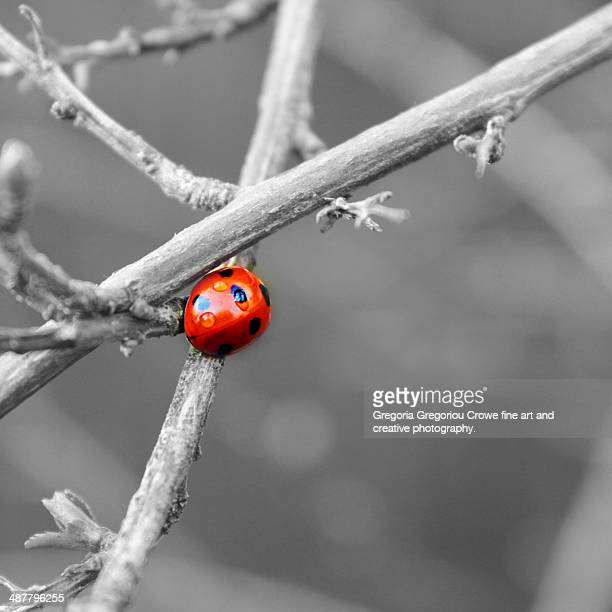 lady bird - gregoria gregoriou crowe fine art and creative photography stock photos and pictures