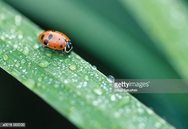 lady bug on grass blade - ladybird stock pictures, royalty-free photos & images
