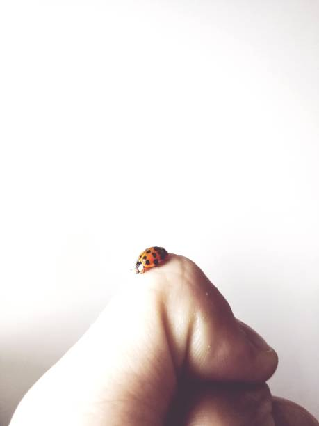 Lady Bug On My Finger