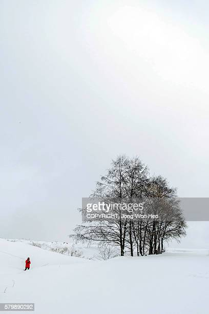 A lady by the tree on a hill covered by white snow