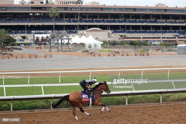 Lady Eli on track in preparation for the Breeders' Cup at Del Mar Race Track on November 1 2017 in Del Mar California