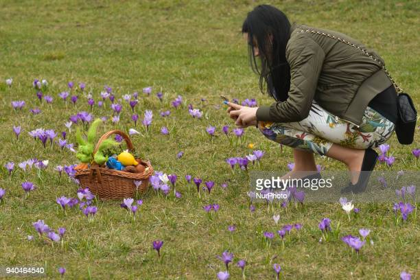 A lady enjoy taking pictures of crocuses on Holy Saturday Spring weather has come to Krakow and will last during the Easter weekend With temperatures...