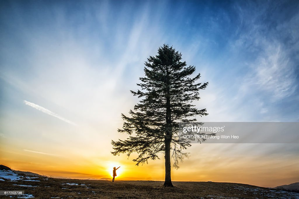 A lady finger-pointing the tree under the sunset : Stock Photo
