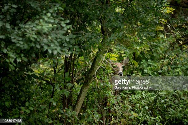 lady of the forest - camuflaje fotografías e imágenes de stock