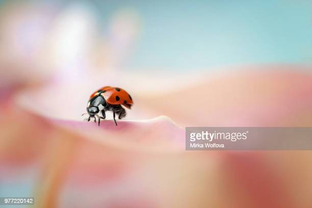 lady - ladybird stock pictures, royalty-free photos & images