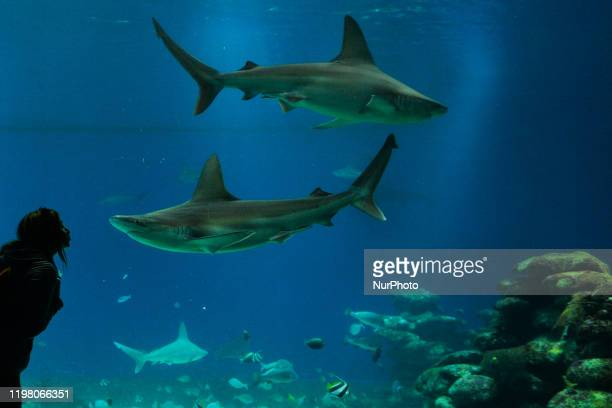 A lady poses for a pictures with sharks at the Underwater Observatory Marine Park aquarium in the Israeli resort city of Eilat on the shore of the...